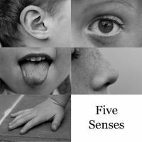 Use the Five Senses in your writing